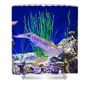 Squid In Monterey Aquarium-california Shower Curtain