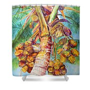 Squire's Coconuts Shower Curtain