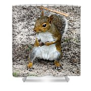 Squirrel 2 Shower Curtain
