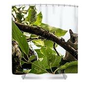 Squirrel 3 Shower Curtain