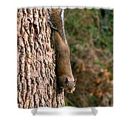 Squirrel 6 Shower Curtain