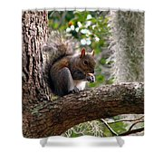 Squirrel 7 Shower Curtain