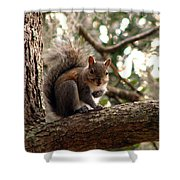 Squirrel 8 Shower Curtain