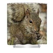 Squirrel And Nuts Shower Curtain