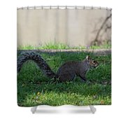 Squirrel At A Stand Still Shower Curtain