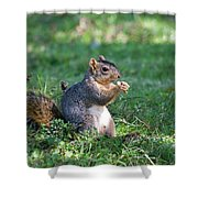 Squirrel Eating A Nut - Eugene Oregon Shower Curtain