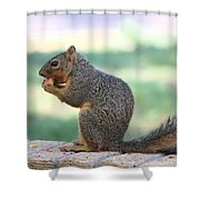 Squirrel Eating Crab Apple Shower Curtain