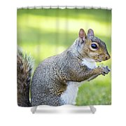 Squirrel Eating Grapes Shower Curtain