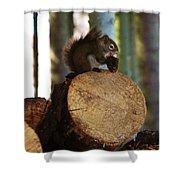 Squirrel Eating Pinecones Shower Curtain