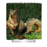 Squirrel Eating Pizza Shower Curtain