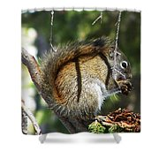 Squirrel Enjoys A Great Meal Shower Curtain