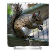 Squirrel II Shower Curtain