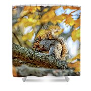 Squirrel In Autumn Shower Curtain