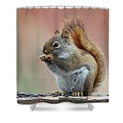 Squirrel In Fall Shower Curtain