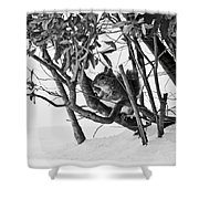 Squirrel In Low Branches Shower Curtain
