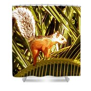 Squirrel In Palm Tree Shower Curtain