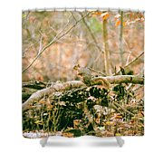 Squirrel In The Woods  Shower Curtain