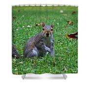Squirrel Iv Shower Curtain