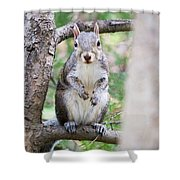 Squirrel Looking At Photographer And Waiting To Be Fed Shower Curtain