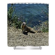 Squirrel Looking Back Over His Shoulder On The Coast Shower Curtain