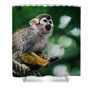 Squirrel Monkey Looking Up Shower Curtain