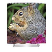 Squirrel - Morning Snack 02 Shower Curtain