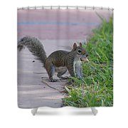 Squirrel Nuts Shower Curtain