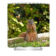 Squirrel On A Log Shower Curtain