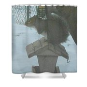 Squirrel On Bird Feeder Shower Curtain
