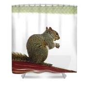 Squirrel On Car Shower Curtain