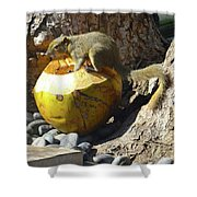 Squirrel On The Coconut Shower Curtain