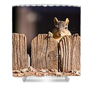 Squirrel On The Fence Shower Curtain