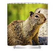 Squirrel On The Rock Shower Curtain