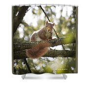 Squirrel On The Spot Shower Curtain