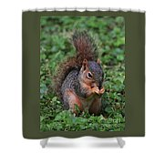 Squirrel Portrait # 3 Shower Curtain