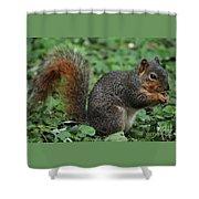 Squirrel Portrait # 6 Shower Curtain