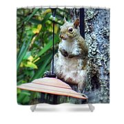 Squirrel Portrait Shower Curtain