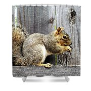 Squirrel - Snack Time Shower Curtain