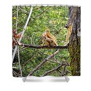 Squirrel Standoff Shower Curtain