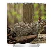 Squirrel With Anchor Shower Curtain