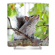 Squirrel With Personality Shower Curtain