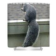 Squirrelart #2 Shower Curtain
