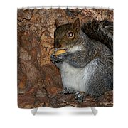 Squirrell Shower Curtain