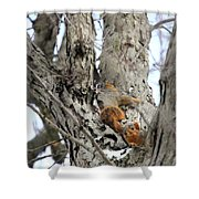 Squirrels At Play Vertically Shower Curtain