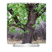 Squirrels Live Here Shower Curtain