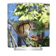 Squirrels Spring Meal Shower Curtain
