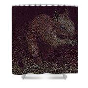 Squirrely Art Shower Curtain