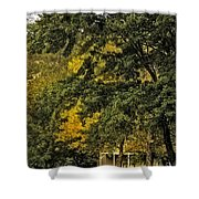 Seeing The Beauty In The Trees Shower Curtain