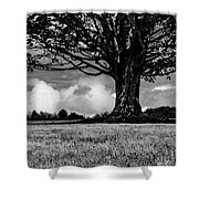 St. Benedict Abbey Single Tree In Summer Shower Curtain