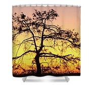 St Johns River Tree Shower Curtain